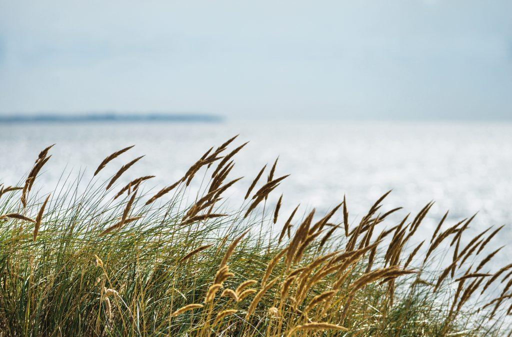 Wildzeit: Nordsee